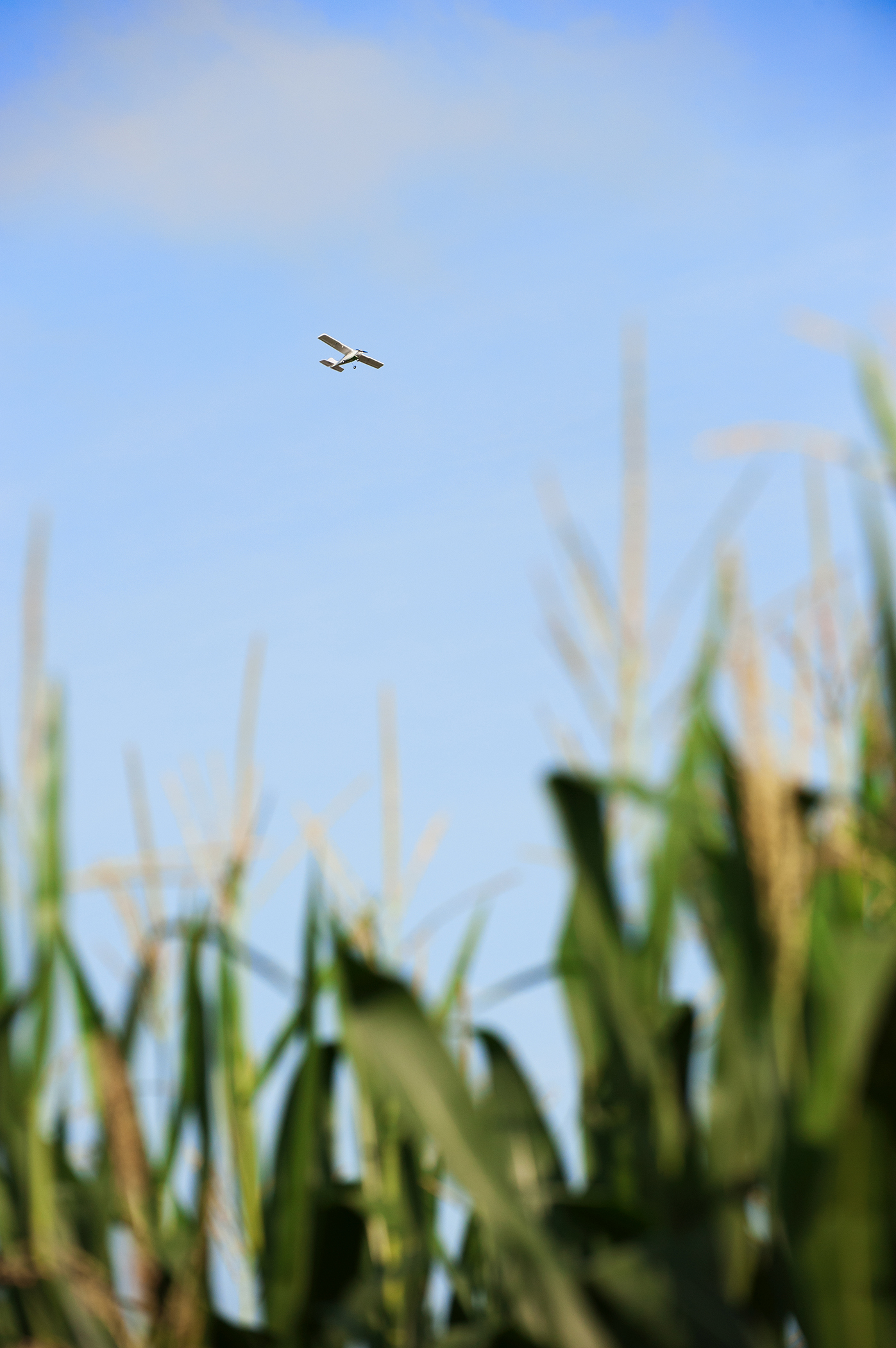 A fixed-wing unmanned aerial vehicle flies above a research plot of corn at Mississippi State's R.R. Foil Plant Science Research Center. MSU's Geosystems Research Institute collaborates with university agronomists on several projects involving the use of unmanned aerial systems in precision agriculture.